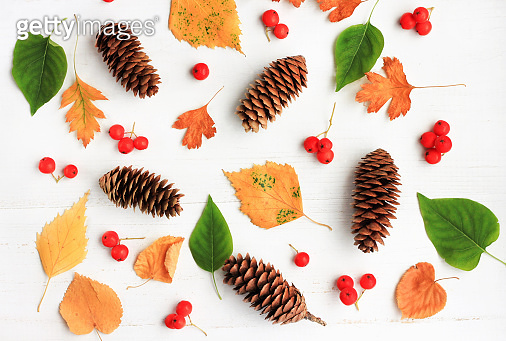 Different autumn themed bright natural elements - yellow leaves, spruce cones, red rowan berries, plant.