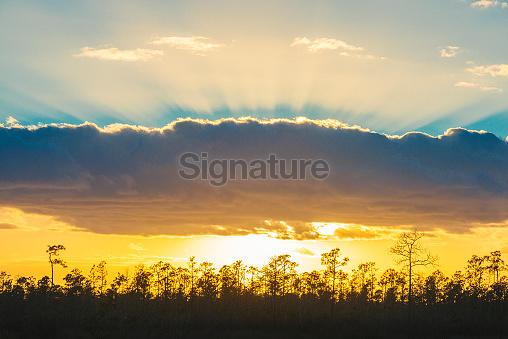 Sunset Everglades National Park Florida Landscape with Sunbeams