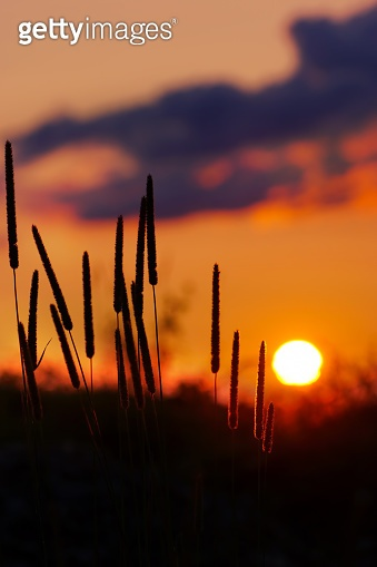 Grass Silhouette awe orange fire sunset background