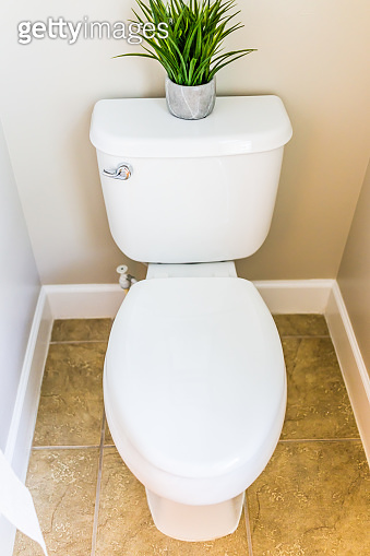 Modern clean white toilet in restroom with toilet tissue paper roll and green plant