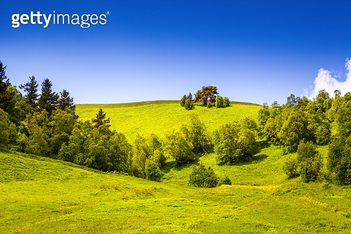 Incredible landscape with green lawns with yellow flowers, trees and beautiful sky on a summer day. Upper Svaneti, Georgia, Europe. Happy lifestyle. Beautiful universe.