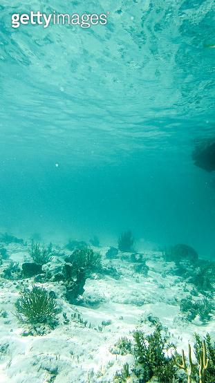 Underwater Reef in the Bahamas