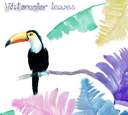 Watercolor Toucan