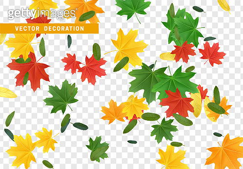 Colorful Fall Foliage. Autumn leaves maple and other trees.