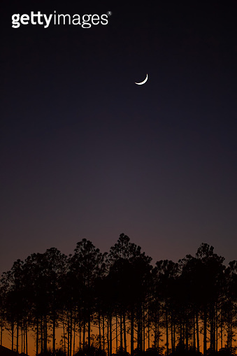 Aerial View of Moon over the trees