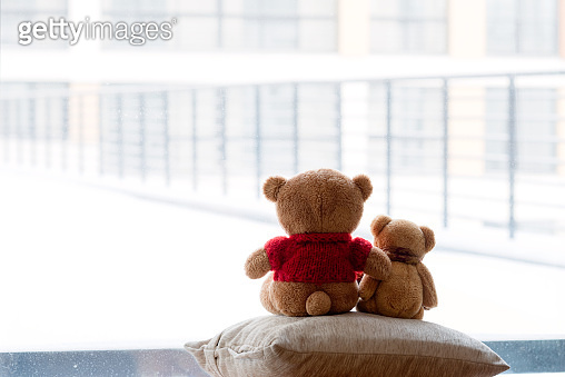 two bear cubs embrace and look out of the window