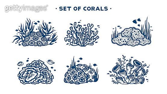 Set of vector coral reef.