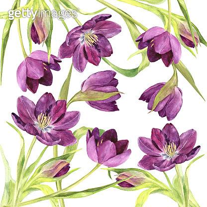 watercolor purple tulips