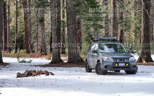 Subaru Forester at Dispersed Campsite in Woods
