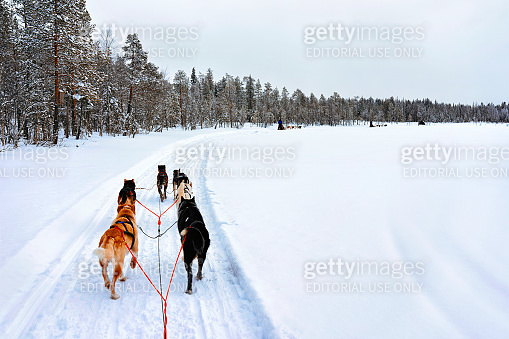 People in Husky Dogs Sled in Rovaniemi at Finland Lapland