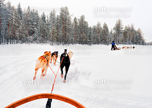 People at Husky Dogs Sled in Rovaniemi in Finland Lapland