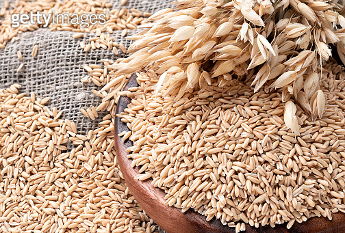 Ears of oats and oatmeal, whole grains in bowl on table. Uncooked grains for oatmeal porridge