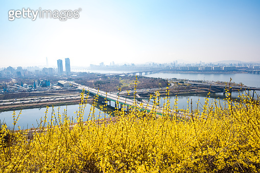 Seoul skyline and Eungbong mountain in spring with Forsythia Flowers.