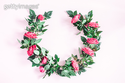 Pink rose flowers on pink background. Flat lay, top view