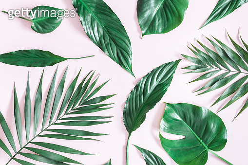 Tropical palm leaves on pink background. Flat lay, top view