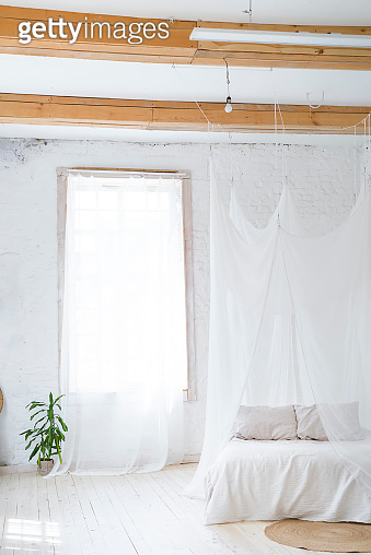 beautiful empty interior with a palm tree and curtain. Idea of white minimalist room with sofa. Scandinavian interior design.