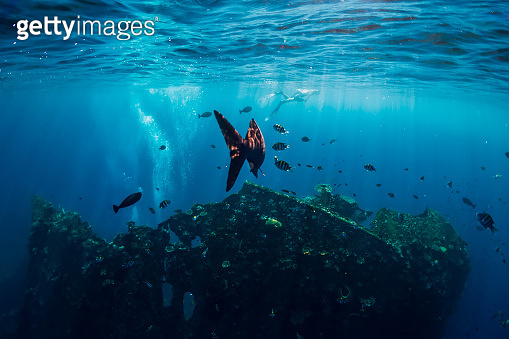 Underwater world with tropical fishes and shipwreck in Bali