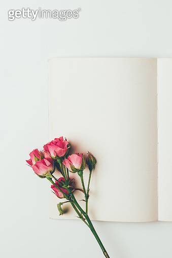 top view of beautiful pink roses on branch and blank card isolated on grey