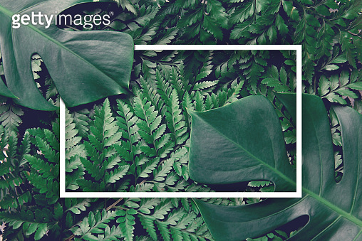 Green leaves nature background with frame design with summer and spring concept, Top view.