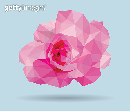 Pink rose low polygon vector on blue background.