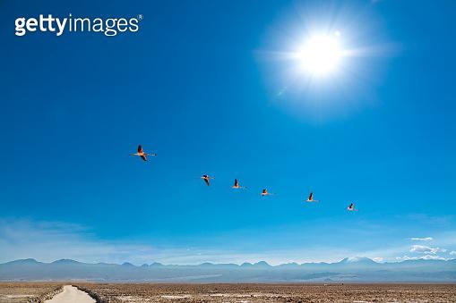 Flamingos fly in Chaxa lagoon salt lake, Atacama desert, Chile, South America
