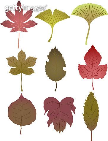 Realistic Autumn leaves set