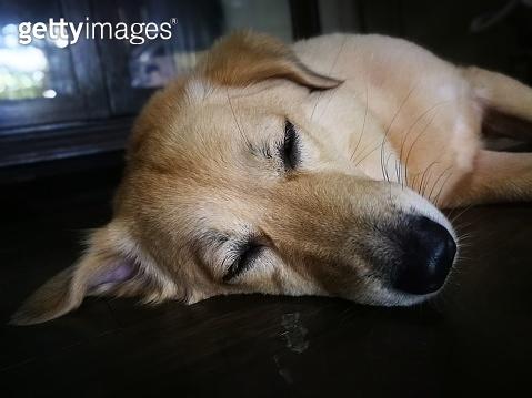 Best Life - Pets