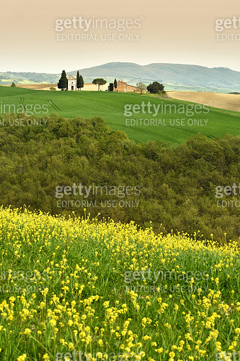 Cappella Di Vitaleta or Vitaleta Chapel near San Quirico D'Orcia in Tuscany. Yellow rapeseed flowers with the famous Chapel on background. Pienza, Italy