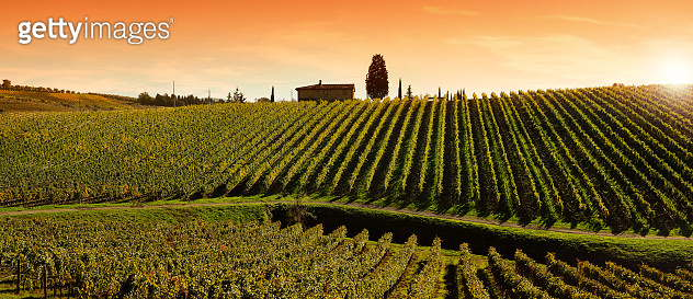 Beautiful Vineyard at sunset near village of Quarate (Florence). Chianti region in Tuscany. Italy.
