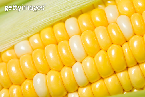 Corn on the cob, closeup