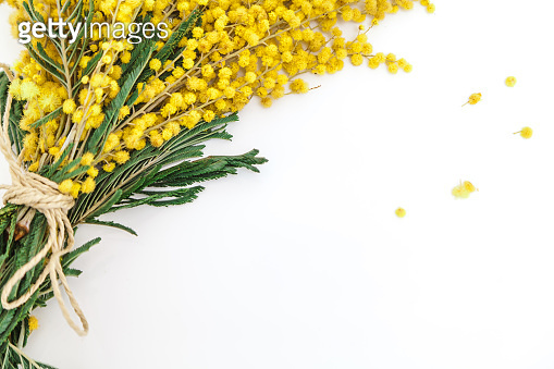 bouquet of yellow mimosa on white background