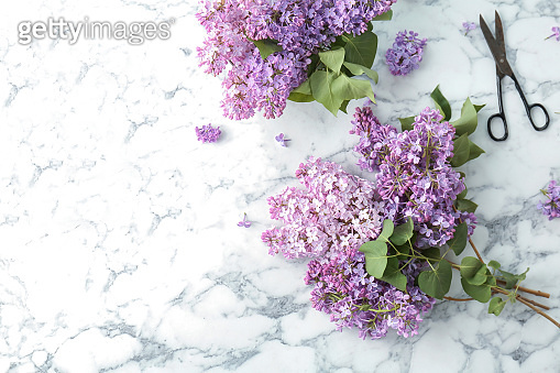 Beautiful blossoming lilac and scissors on light background, top view. Spring flowers