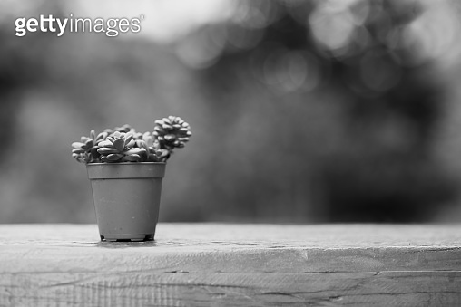 Cactus on wooden table,Natural Cactus Plants on blurred of garden background.Memories scene.
