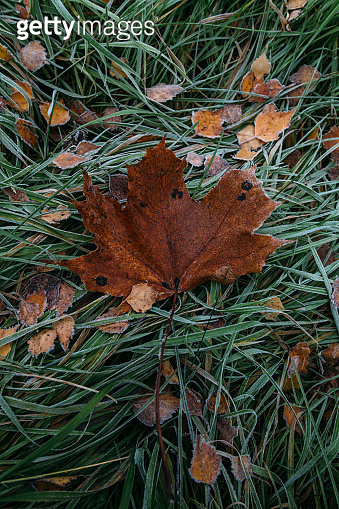 Frosty leaves and grass nature background