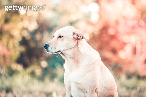 Happy adopted dog. Pet rescue concept