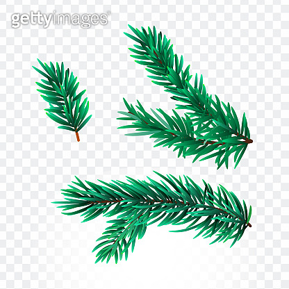 Christmas background with green pine branching.