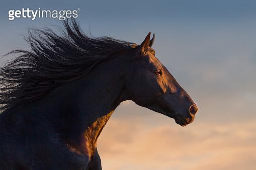 Black horse portrait