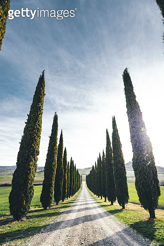 cypress road in italy