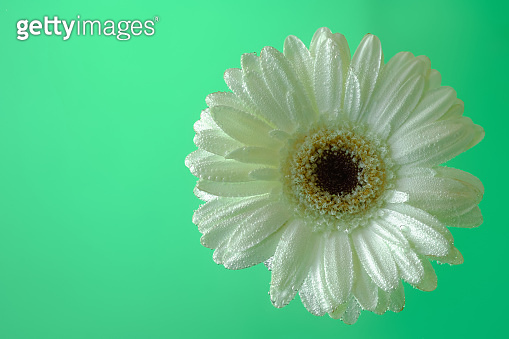 Green flower head surface top view isolated on background
