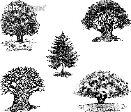 Vector drawings of different tree