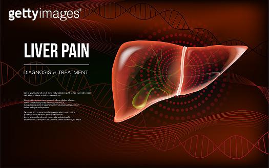 Dark red realistic liver and gallbladder baner concept