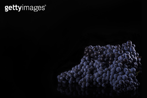 Dark bunch of grape with water drops in low light lies on black isolated background. Close-up