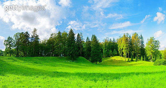 Forest spring landscape panorama - dense forest trees in the valley in sunny weather