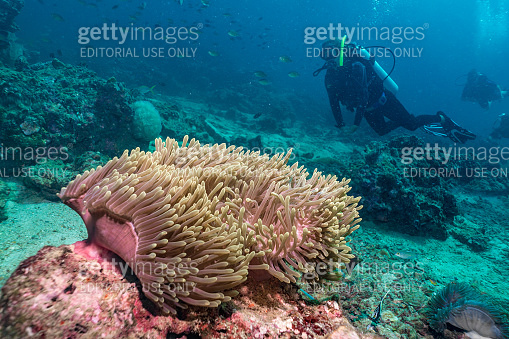 People on Scuba Diving aquatic sport vacation with abundant marine life