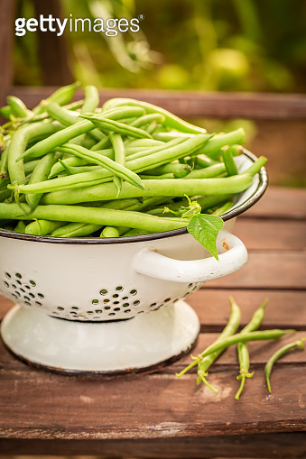 Fresh and green beans in a summer greenhouse