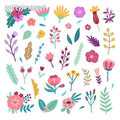 Flowers and plants on white background.Vector blossoms and leaves illustrations