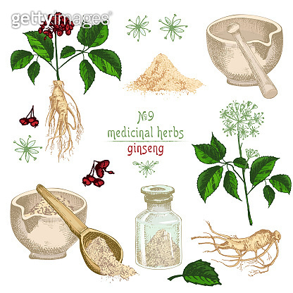 Realistic Botanical colorful sketch of ginseng root, flowers, berries, bottle, mortar and pestle isolated on white