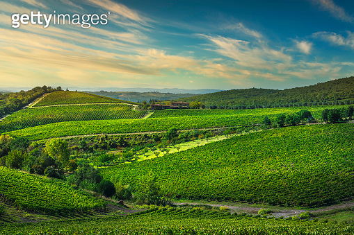 Gaiole in Chianti vineyards and panorama at sunset. Tuscany, Italy