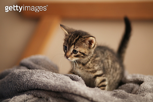 Cute little kitten on bed. Caring for pets, pet from the shelter for animals