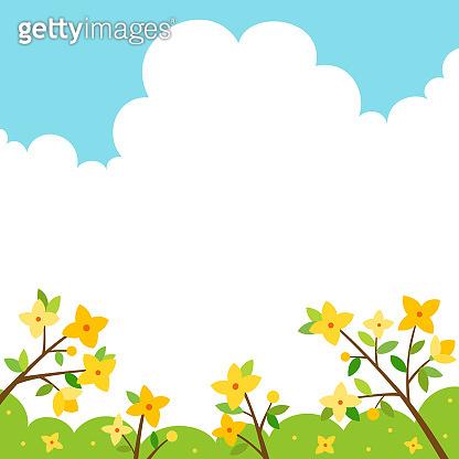 Forsythia flowers scenery.Spring background